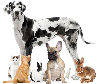 Animal Kingdom Veterinary Hospital - Veterinarians in Cary, NC